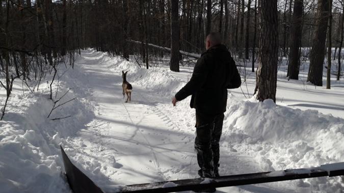 В Конотопе косулю спасали из снежной ловушки фото 1