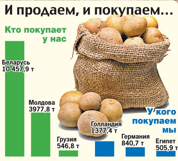 Может ли в Украине закончиться своя картошка фото 1