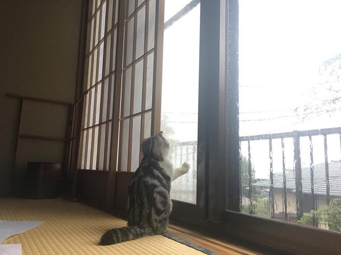 Японский отель ввел услугу