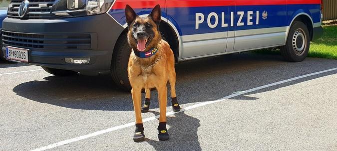 Полицейских собак Австрии и Швейцарии обули в ботинки фото 1