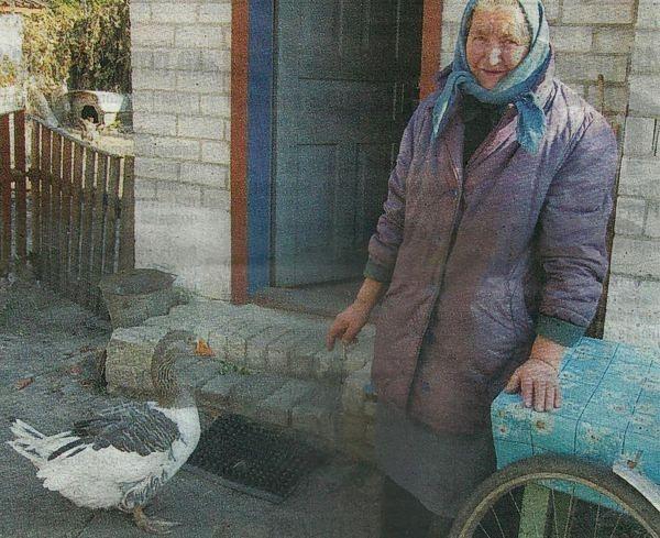 Самый старый гусь Украины живет в Черниговской области фото 1