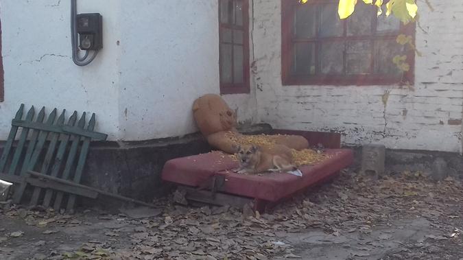 Собаку трагедия не взволновала. У нее все хорошо. Фото: автор