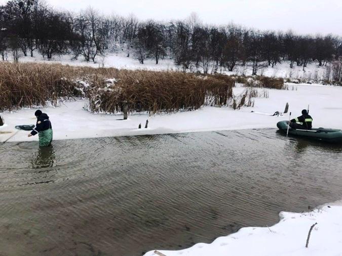 Орнитолог считает, что лебедь скорее станет жертвой собаки, чем умрет от того, что примерз ко льду. Фото: ГСЧС Украины