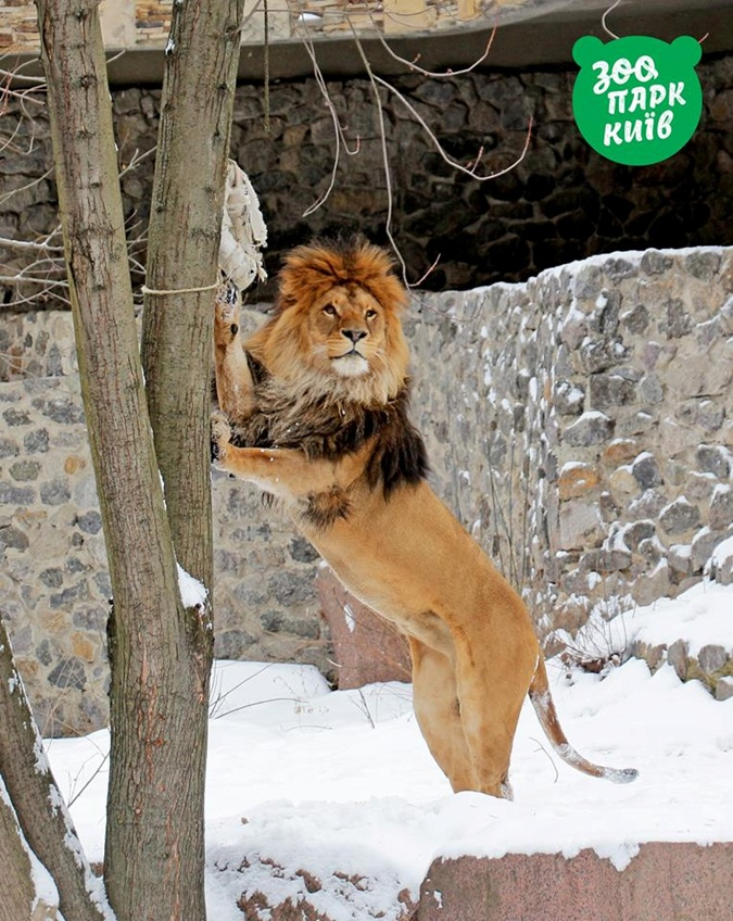 Фото: пресс-служба Киевского зоопарка