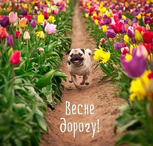 Первый день весны открытки. Фото: соцсети