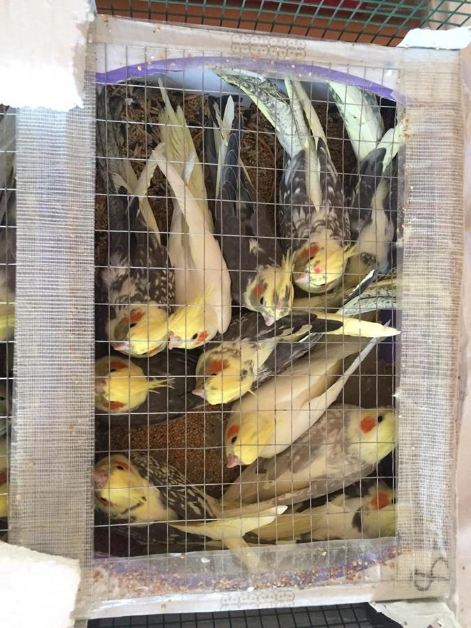 Шесть ящиков с попугаями. Такой контрабанды украинские пограничники еще не видели!
