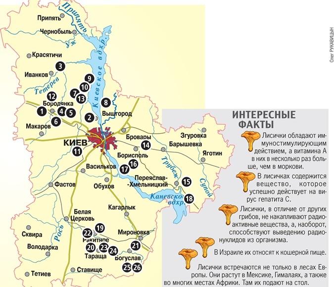 Грибные места Киевской области 2019
