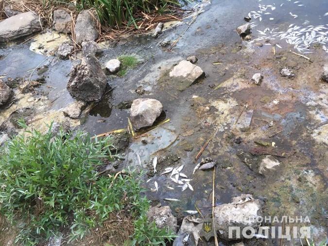 Из-за жары водоем высыхает. Фото: Нацполиция