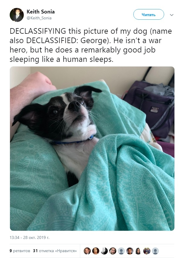 Трамп своим твитом о собаке-герое спровоцировал новый флешмоб в Сети