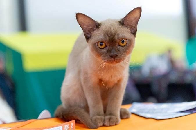 Считается, что коты менее общительны и дружелюбны, чем собаки