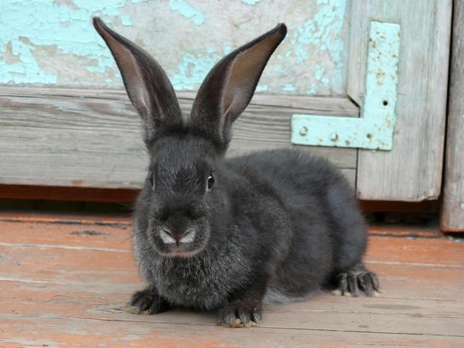 Кролик - пушистый забавный любимец, которого приятно гладить.