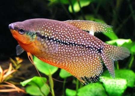 Аквариум с рыбками - альтернатива телевизору.