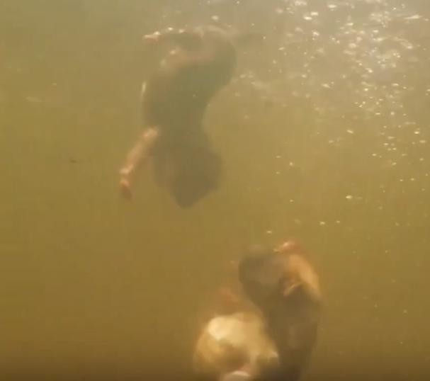 Фото: скриншот из видео
