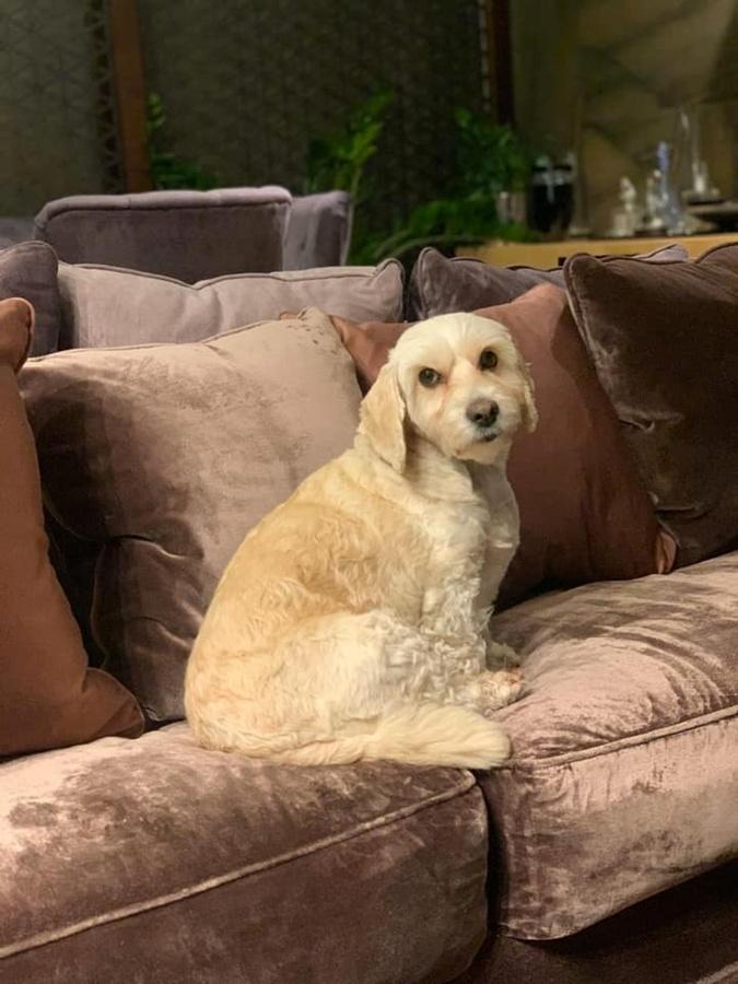 А так пес выглядит сейчас. Фото: facebook.com/permalink