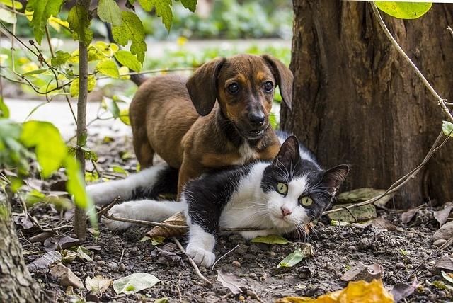 Такса уживется с другими домашними животными.