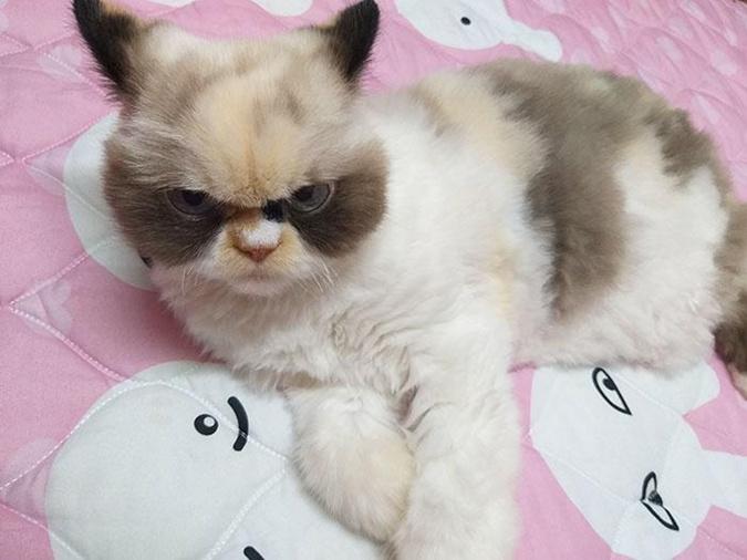 Новая сердитая звезда соцсетей по кличке Мяу-Мяу.