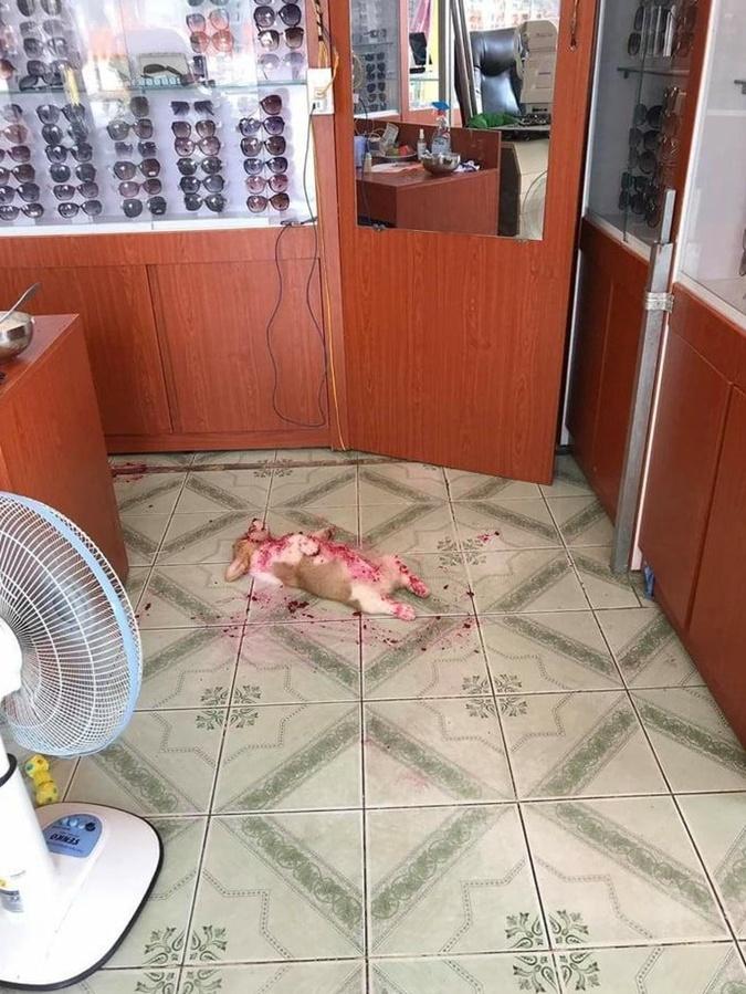 В таком виде щенка и нашли. Фото: reddit.com