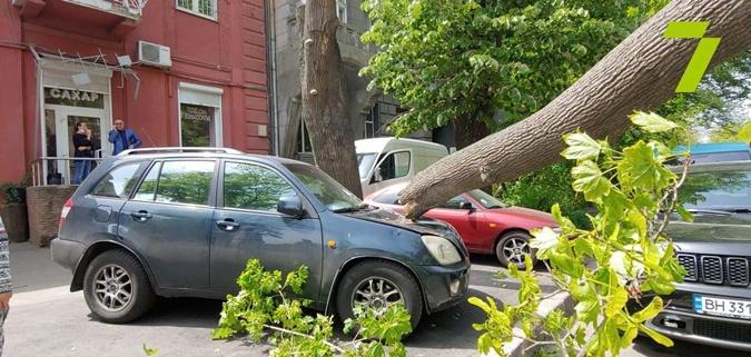 В Одессе 14 мая упала ветка на припаркованные автомобили и повредила провода. Фото: телеграмм-канал