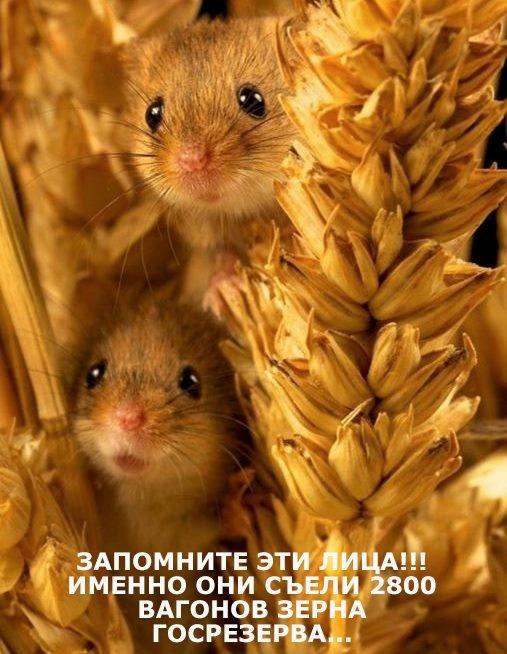 Мем про мышей стал одним из самых обсуждаемых на этой неделе. Фото: соцсети