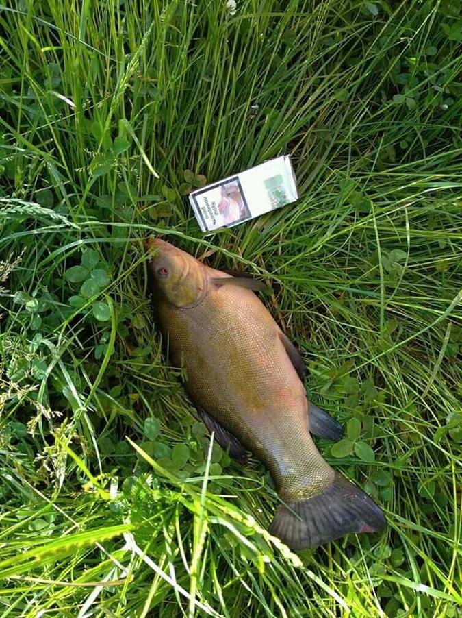 Мор рыбы на Волыни. Фото:facebook