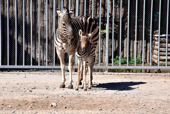 Фото: Одесский зоопарк