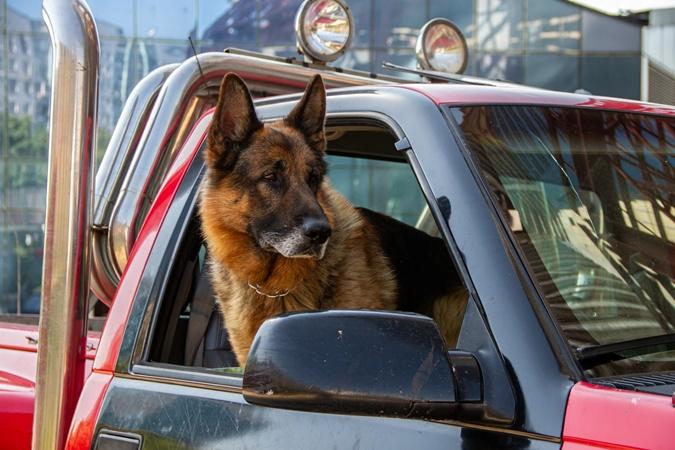 собака в сериале Пес