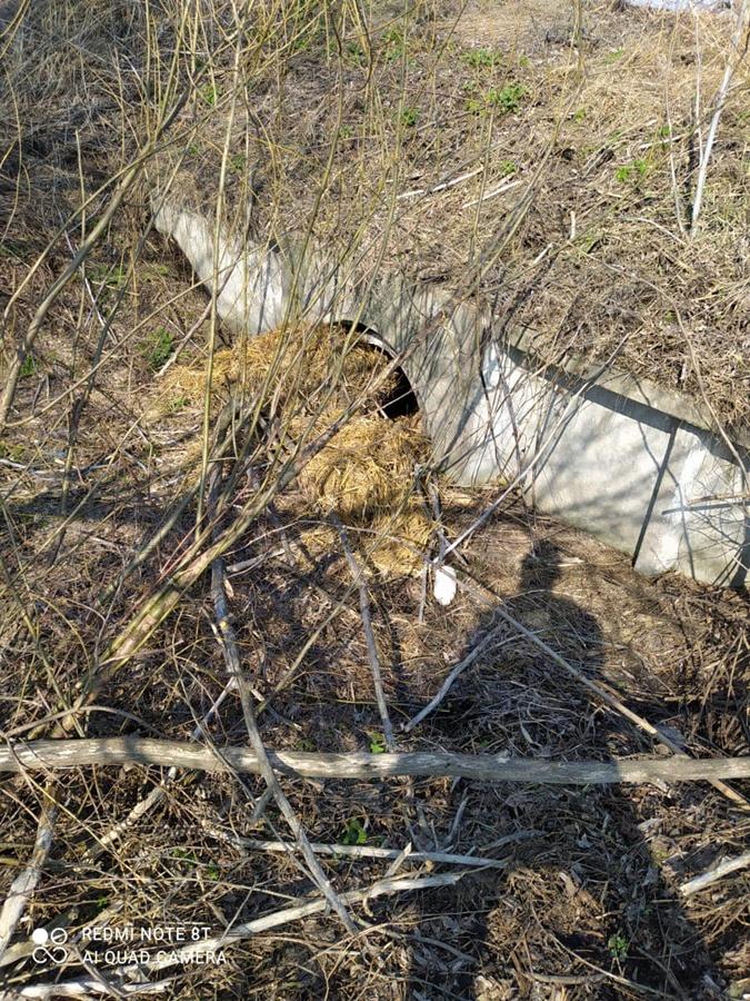 Тело активиста в Киеве нашли в лесополосе