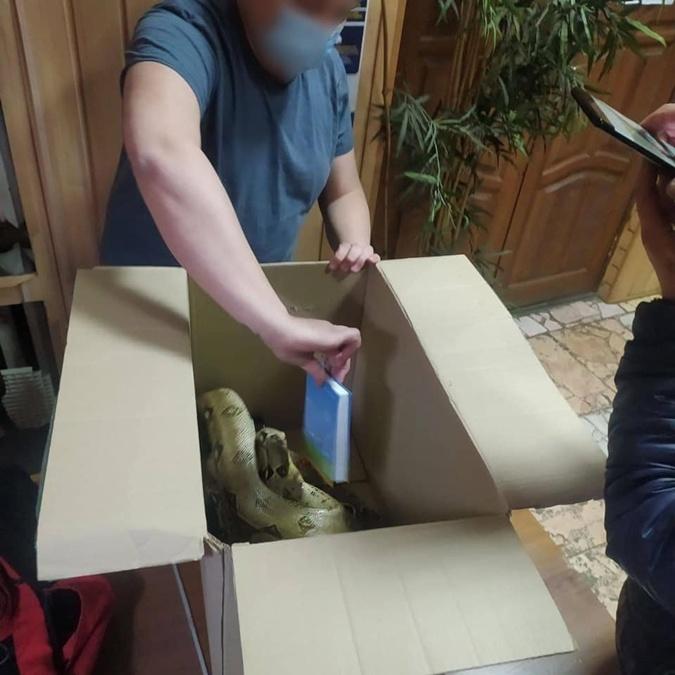 Змея в коробке