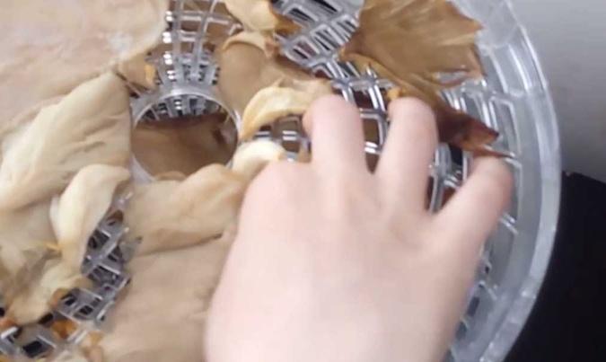 Сушить грибы в сушилке