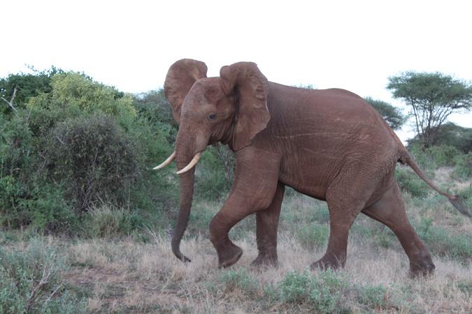 Красные слоны всегда прекрасны.