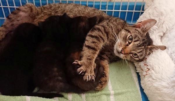 Кошачье гнездо