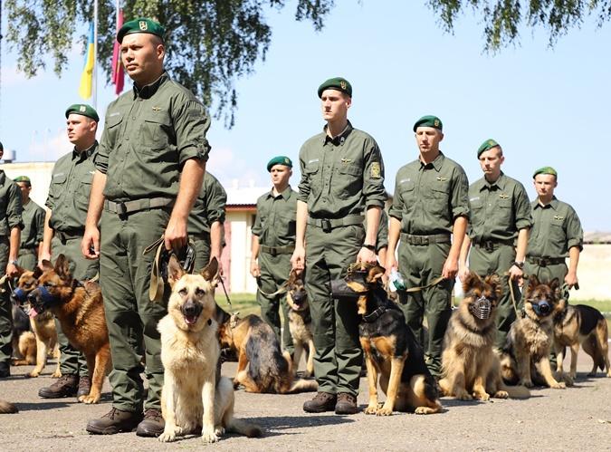 собаки пограничников