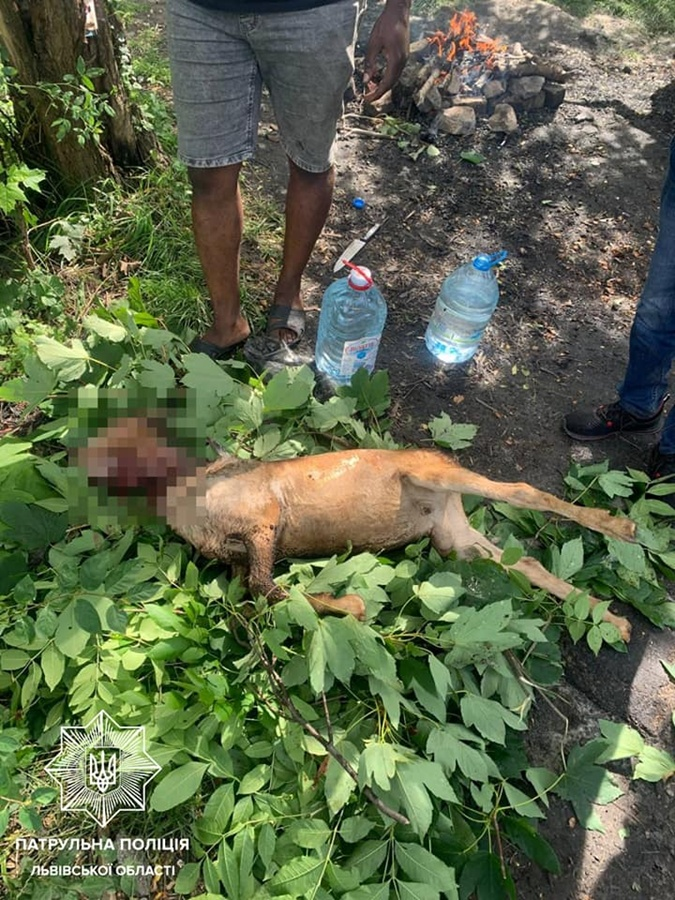 убитая коза