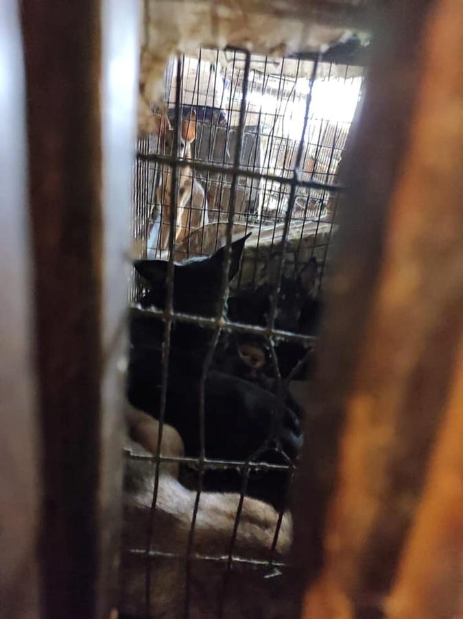 собаки в нелегальном приюте