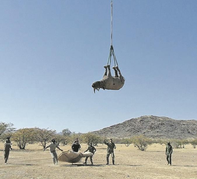 транспортировка носорогов