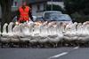 …А догадливый Нильс заранее спрыгнул с гуся и улетел в Таиланд