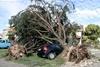 Дерево упало прямо на машину, что тут еще сказать…