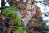 - Перед грозой так пахнут каштааааны…