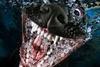 подводные фотографии собак Сета Кастила
