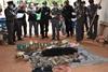 В святом храме нашли 40 мертвых тигрят