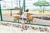 В Одессе новый зоопарк с жирафом и шимпанзе