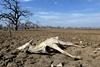 Сильная засуха на реке Пилькомайо