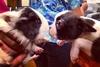 Животные близнецы