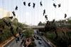олимпийская инсталляция из живых людей в сан паулу