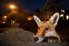 Лучшие снимки дикой природы 2016 года
