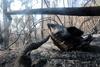 лесной пожар в испании