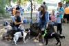 выставка беспородных собак в днепре
