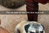 коты и собаки приколы
