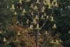 аномальное цветение растений осенью