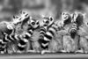 Лучшие черно белые фотографии дикой природы
